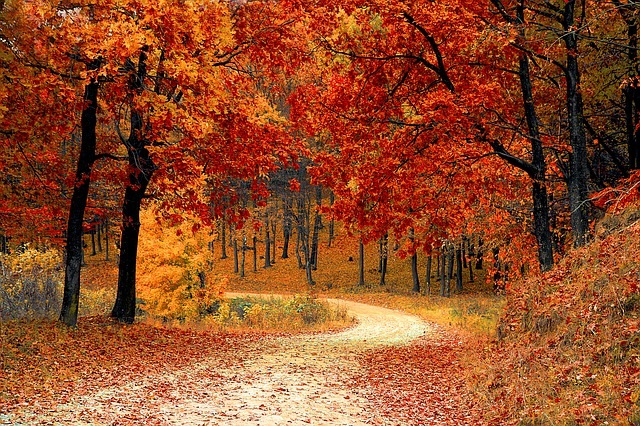 podzim, listí
